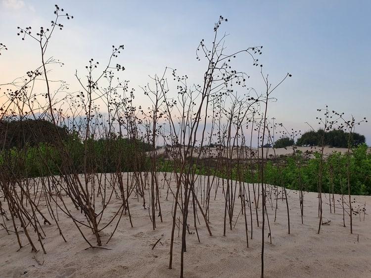 עקבות בחול - חוף בית ינאי - טיול בשבת עם ילדים