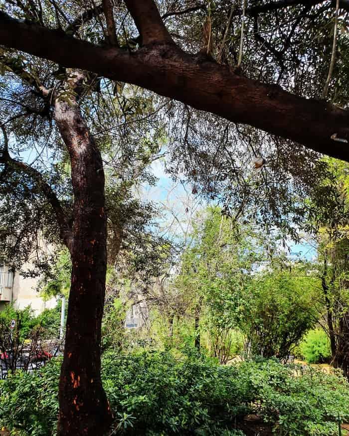 הגינה ברחוב חיסין - תל אביב אהובתי -כנרת מטיילת - לטייל בתל אביב