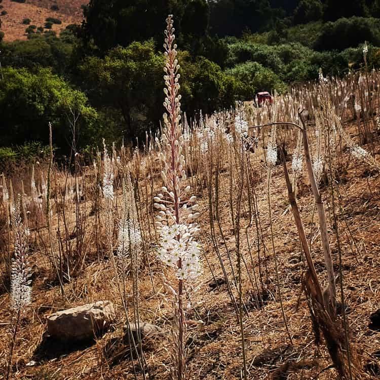 חצבים - הירדן ההררי - טיול משפחות - כנרת צור בלוג טיולים