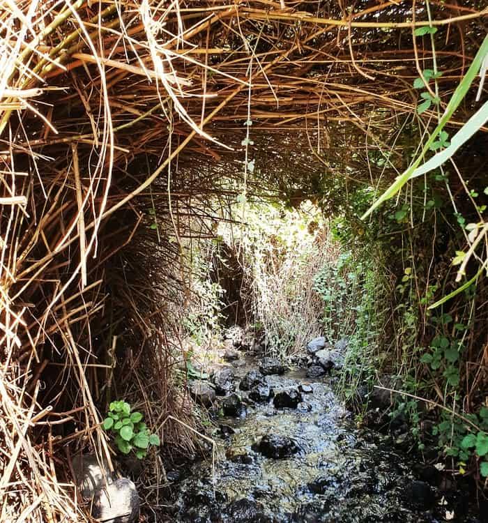 עין דבשה - רמת הגולן - טיול עם ילדים - כנרת מטיילת - טיול מים