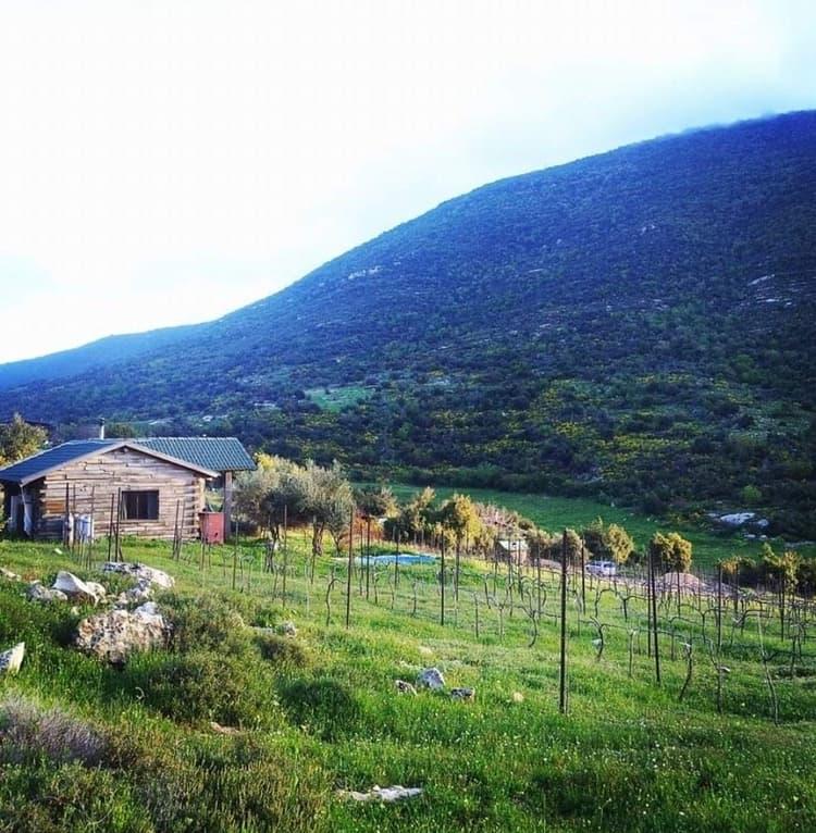 חוות הנמורה - כנרת מטיילת - הר המירון - טיול לשבת - צימר משפחות