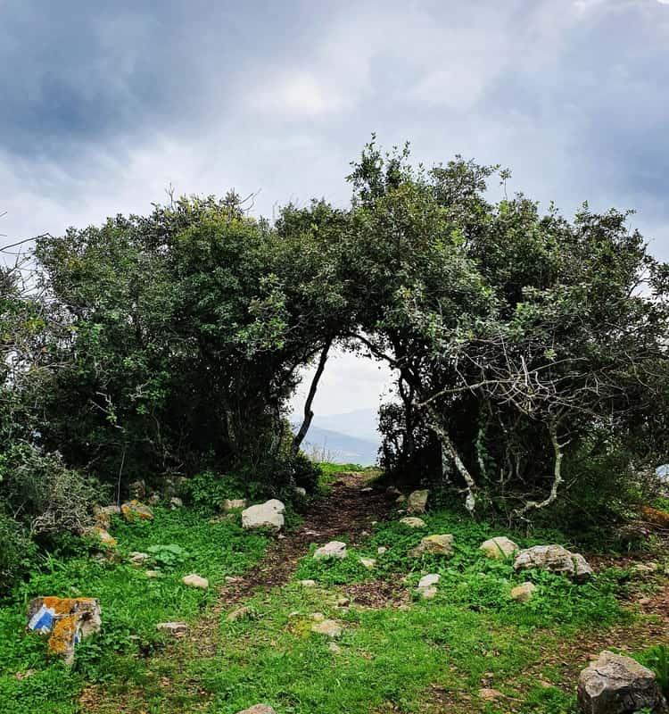 הר עצמון - שביל הפסגה - גליל תחתון - כנרת מטיילת - טיול עם ילדים