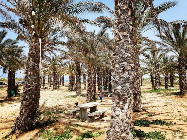 Jisr az-Zarqa - ג'סר א זרקא - כפר הדייגים ג'סר א זרקא - שמורת הטבע נחל תנינים - טיולבשבת עם ילדים