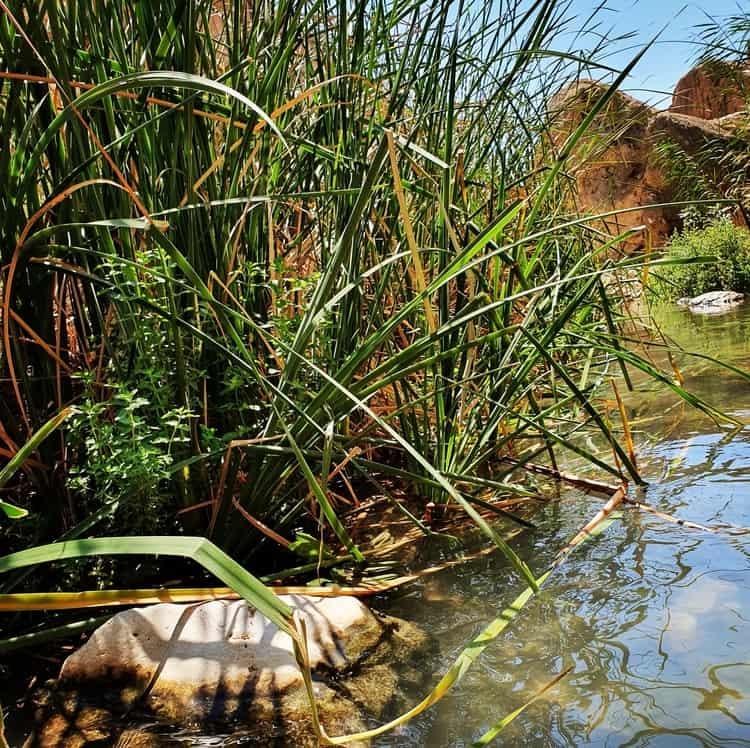 עין פרת - טיול קצר בשבת עם ילדים - טיול מים - ים המלח - טיול קיץ -