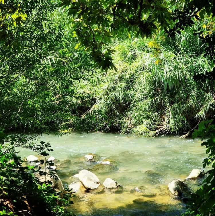 שמורת טבע שניר - טיול מים עם ילדים