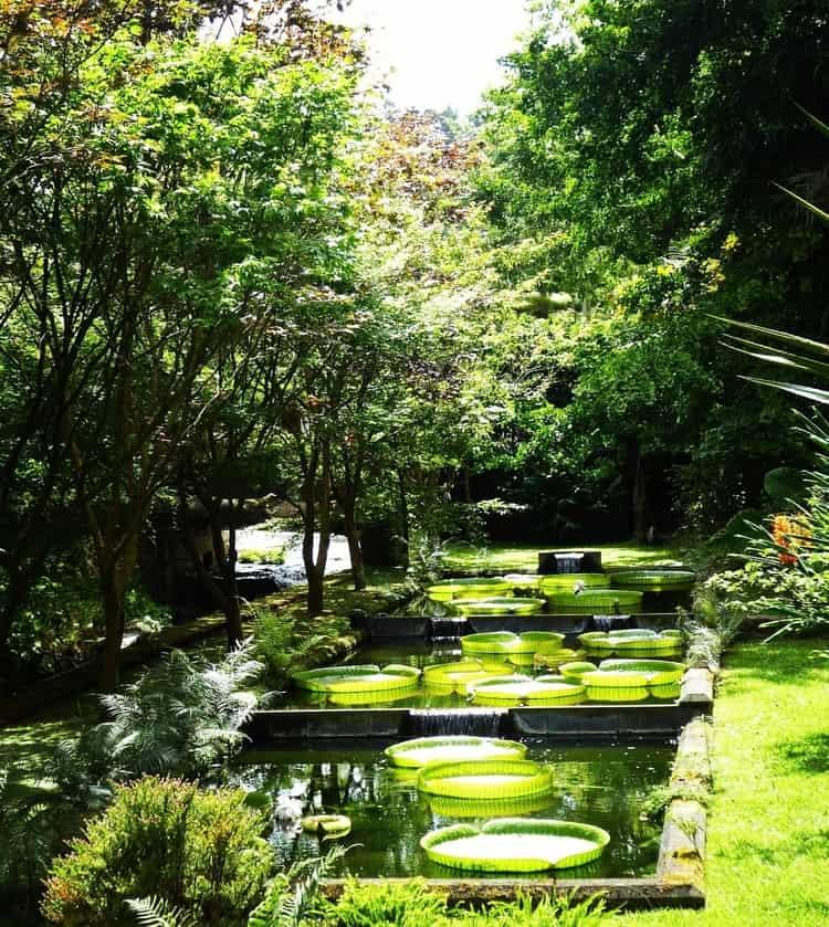 סאו מיגל - האיים האזוריים עם ילדים - גנים בוטניים - Terra Nostra Gardens