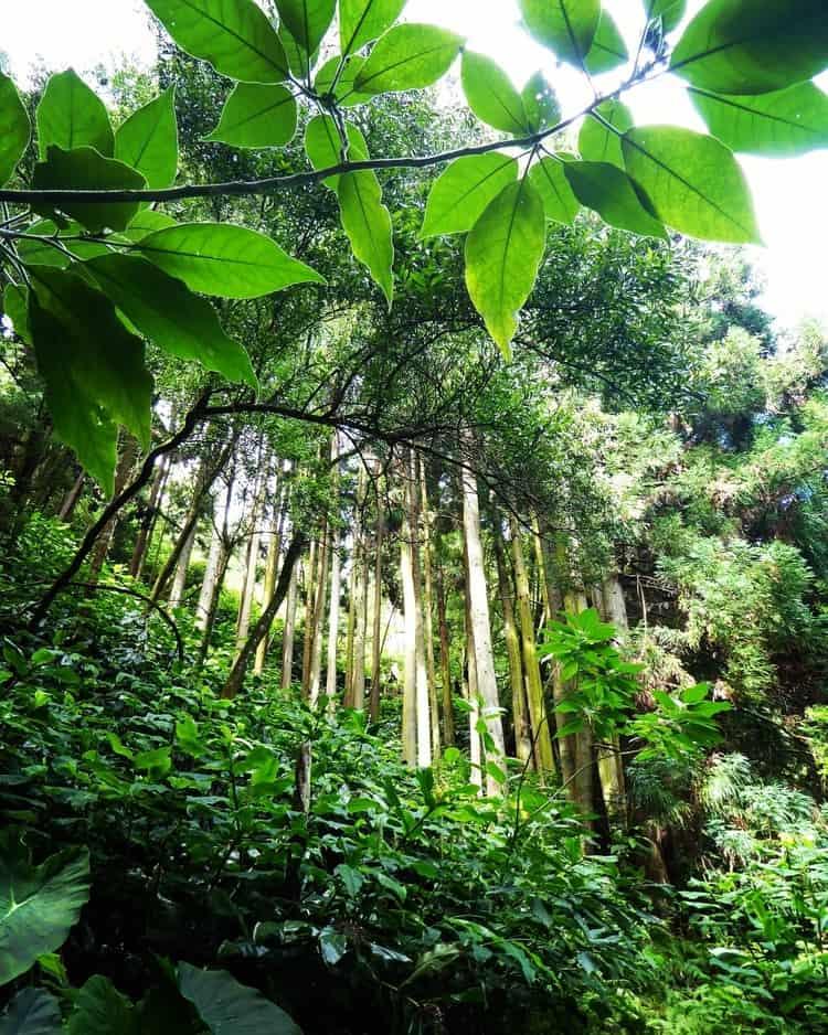 סאו מיגל - טיול באיים האזוריים - Ribeira dos caldeiros